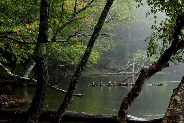 28,9,22 雨の湯の湖2-6b.jpg