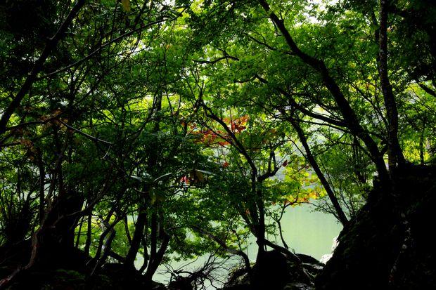 28,9,22 雨の湯の湖3-7b.jpg