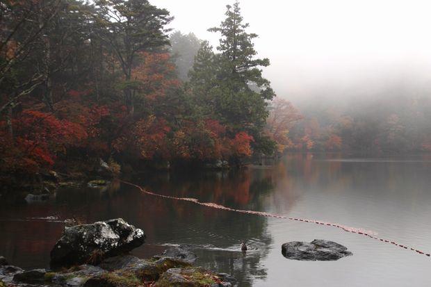 29,10,14湯の湖の紅葉1-1b.jpg