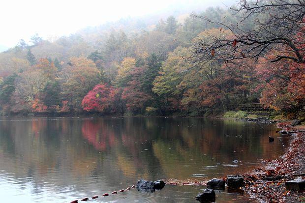 29,10,14湯の湖の紅葉1-2b.jpg