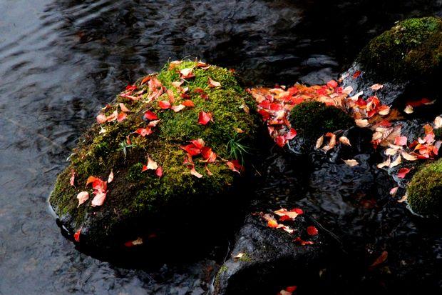 29,10,14湯の湖の紅葉2-6b.jpg
