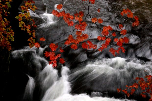 29,10,14竜頭の滝の紅葉1-7b.jpg
