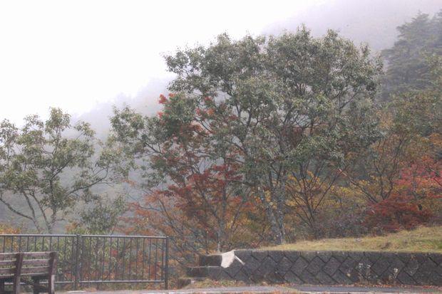 29,10,7 雲と紅葉1-6b.jpg