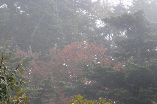 29,10,7 雲と紅葉1-8b.jpg