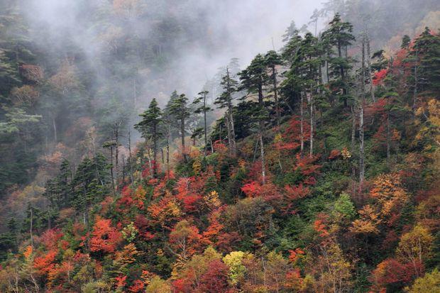 29,10,7 雲と紅葉3-7b.jpg