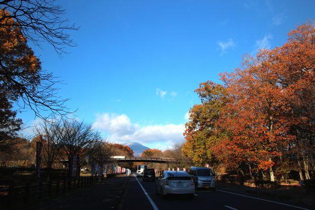 29,11,19 冠雪連山と大谷川公園の紅葉2-9b.jpg
