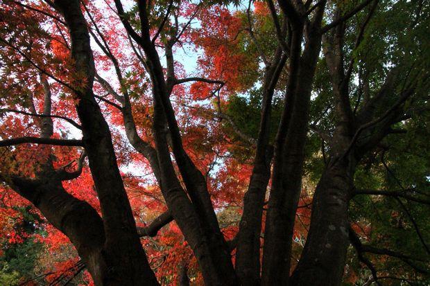 29,11,1杉並木公園の紅葉1-8b.jpg
