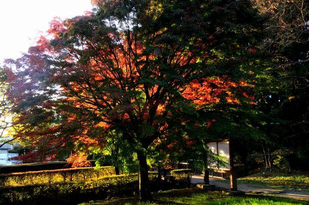 29,11,1杉並木公園の紅葉2-6b'.jpg