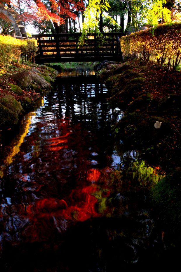 29,11,1水に映る紅葉1-5'b.jpg