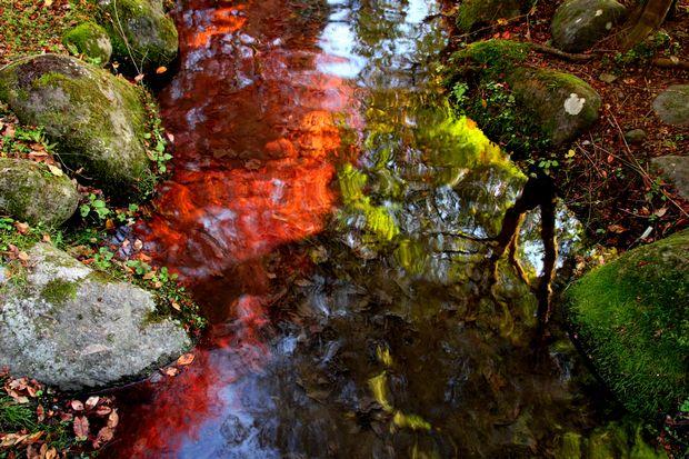 29,11,1水に映る紅葉1-7b.jpg