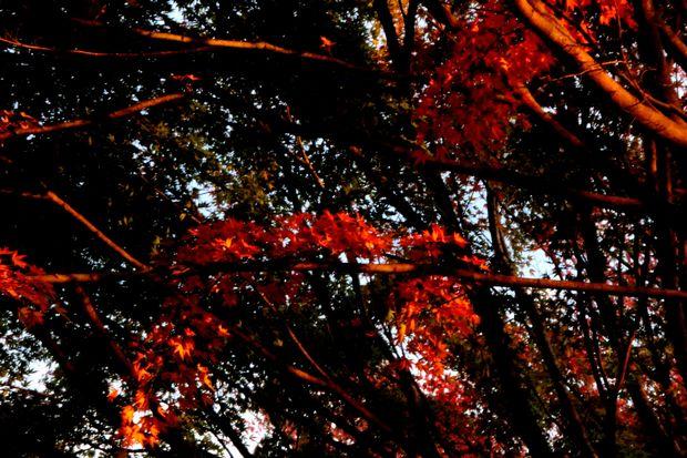 29,11,2杉並木公園の紅葉2-2b.jpg