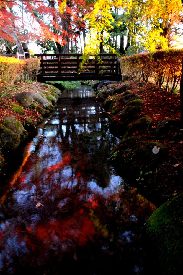 29,11,6水に映る紅葉1-2b.jpg