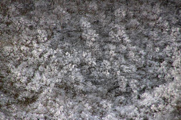 29,12,03天空の回廊の霧氷5-4b.jpg