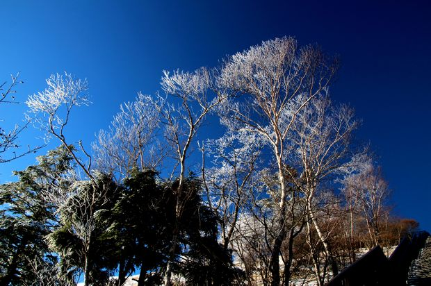 29,12,03天空の回廊の霧氷7-1b.jpg