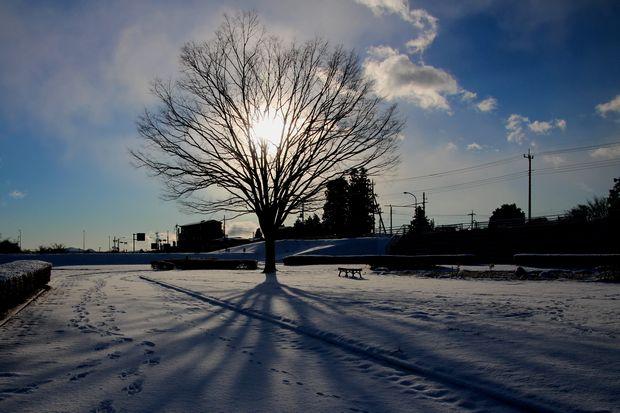 29,1,15 大木と日の出1-1b.jpg