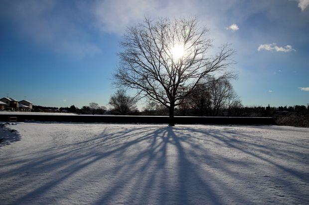 29,1,15 大木と日の出1-6b.jpg