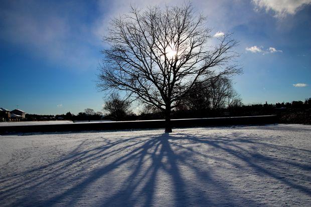 29,1,15 大木と日の出1-7b.jpg