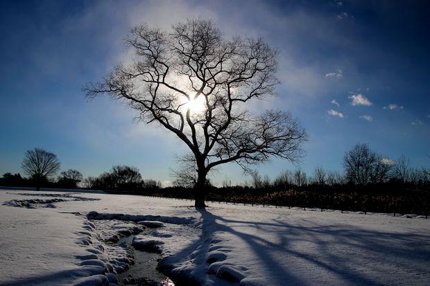 29,1,15 大木と日の出1-9b.jpg