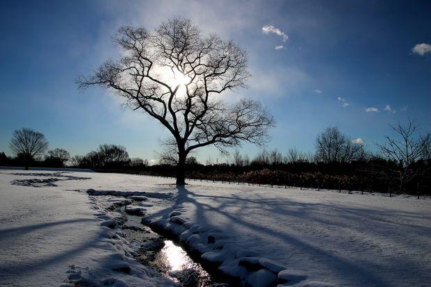 29,1,15 大木と日の出2-3b.jpg