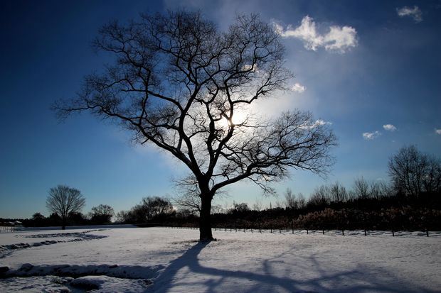 29,1,15 大木と日の出2-7b.jpg