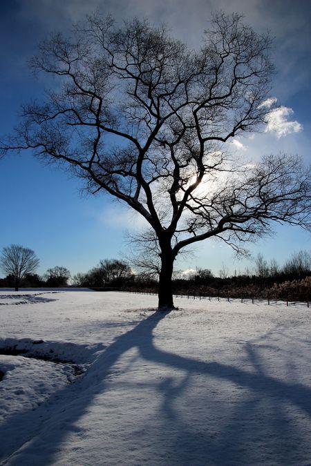 29,1,15 大木と日の出2-8b.jpg