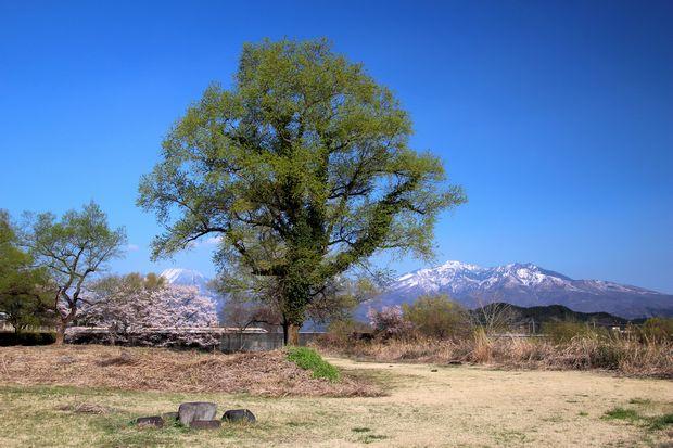 29,,4,14 桜と連山3-2スペーシアb.jpg