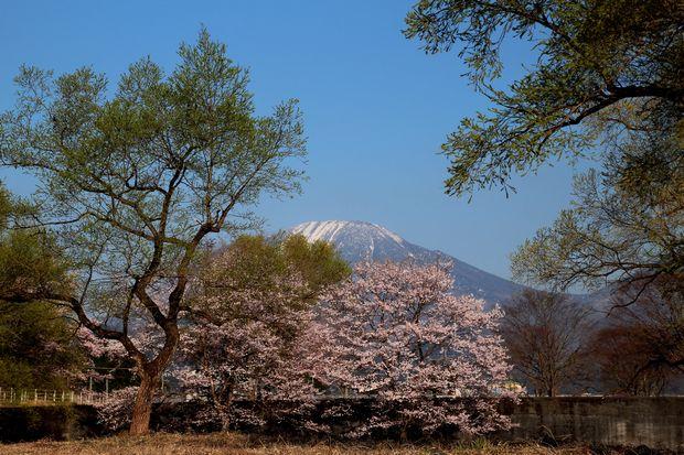 29,4,14 朝日と桜4-6b.jpg