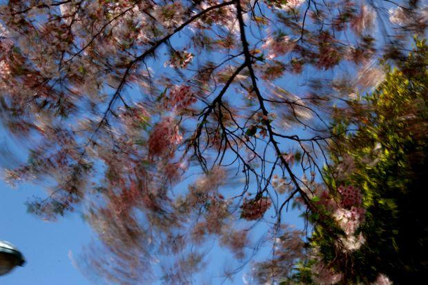 29,4,15 花に風1-1b.jpg