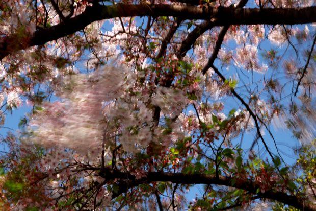 29,4,15 花に風1-5b.jpg