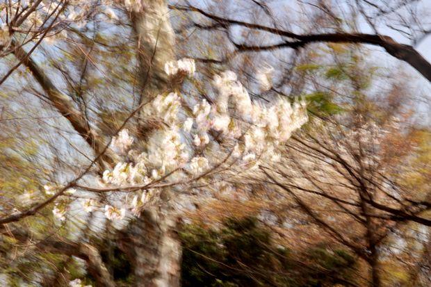 29,4,15 花に風1-8b.jpg