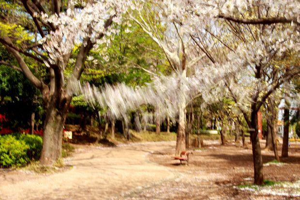 29,4,15 花に風1-9b.jpg