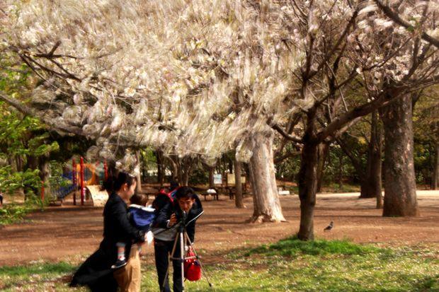 29,4,15 花に風2-3b.jpg