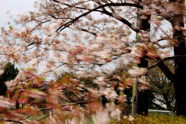 29,4,15 花に風2-5b.jpg