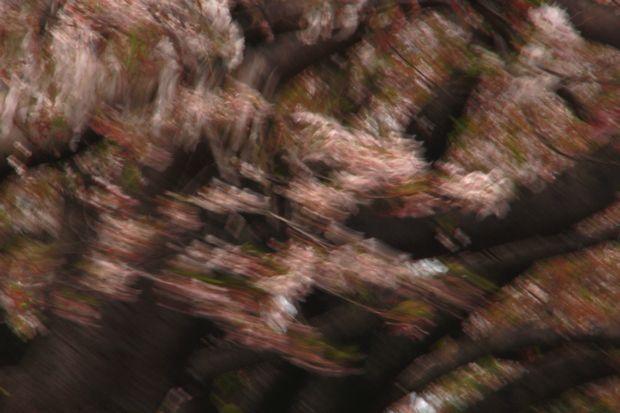 29,4,15 花に風2-9b.jpg