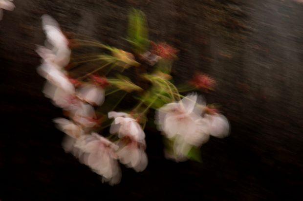 29,4,15 花に風3-3b.jpg