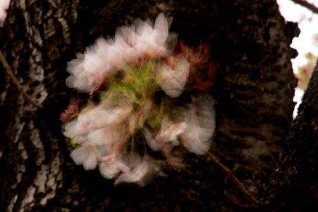 29,4,15 花に風3-6b.jpg