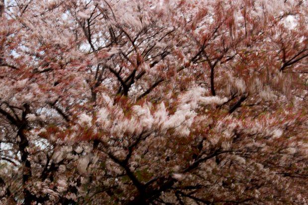29,4,15 花に風3-8b.jpg