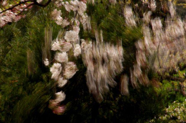 29,4,15 花に風4-1b.jpg