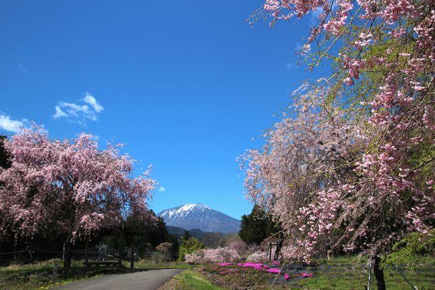 29,4,23 連山と桜3-5b.jpg