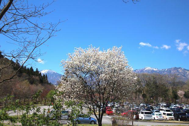 29,4,23 連山と桜4-3b.jpg