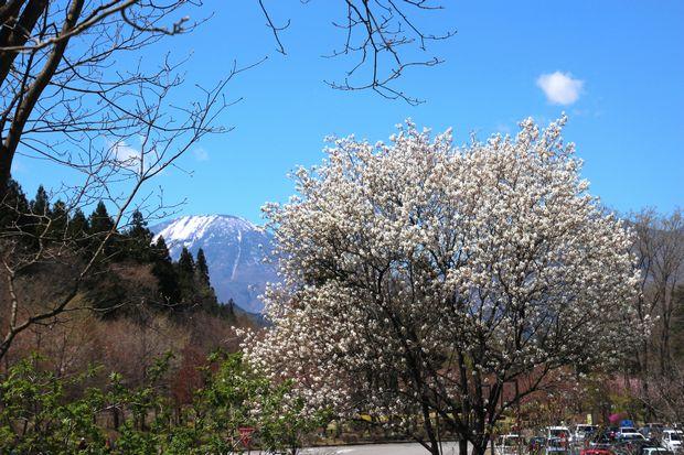 29,4,23 連山と桜4-5b.jpg