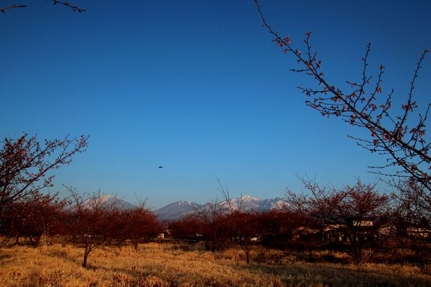 29,4,3 雪の連山 河津ザクラ1-2b.jpg