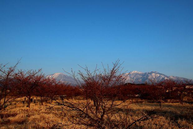29,4,3 雪の連山 河津ザクラ1-5b.jpg