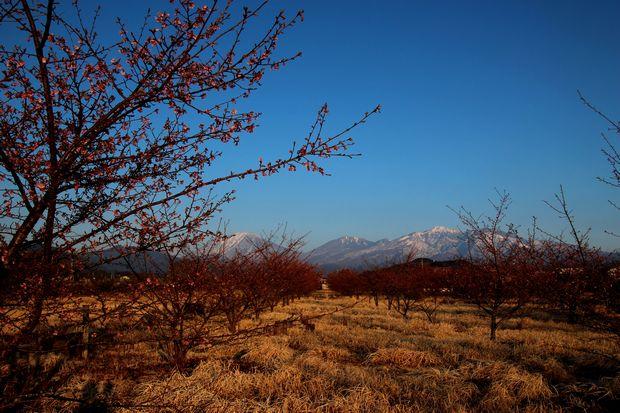 29,4,3 雪の連山 河津ザクラ1-6b.jpg