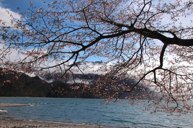 29,5,14千手ヶ浜の男体山と桜1-4b.jpg