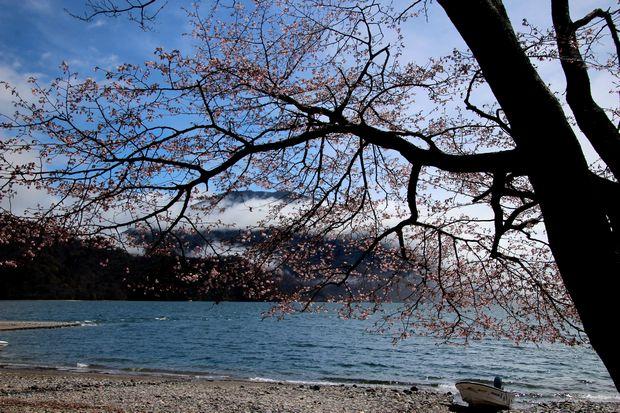 29,5,14千手ヶ浜の男体山と桜1-8b.jpg