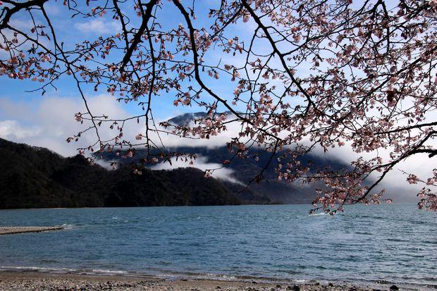 29,5,14千手ヶ浜の男体山と桜2-1b.jpg
