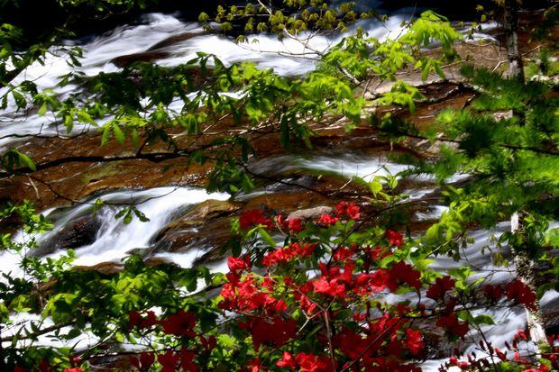 29,6,11 竜頭の滝のヤマツツジ1-4b.jpg