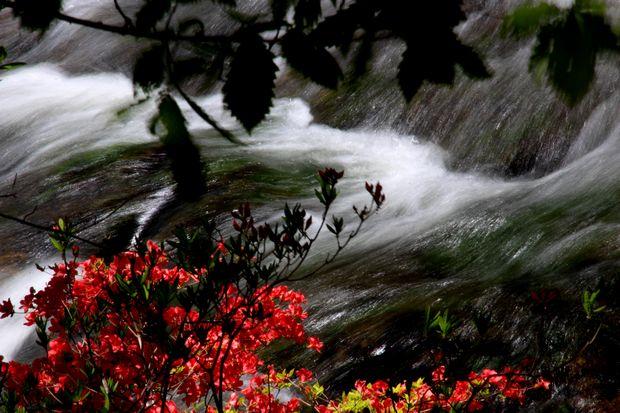 29,6,11 竜頭の滝のヤマツツジ1-5b.jpg