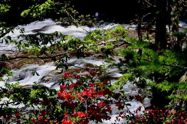 29,6,11竜頭の滝とヤマツツジcb.jpg